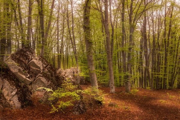 Forêt... des sens ! Sylvothérapie
